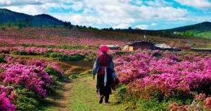shangrila-meadows
