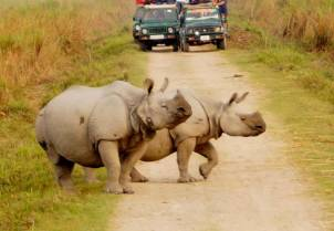 kaziranga-national-park-one-horned-rhinos